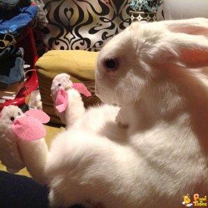 Coniglio con pantofole da coniglio