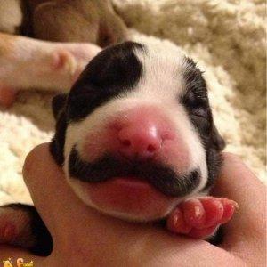 Cucciolo coi baffi
