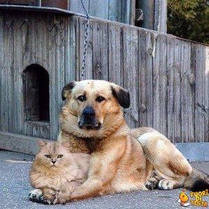 Due amici uguali ma diversi