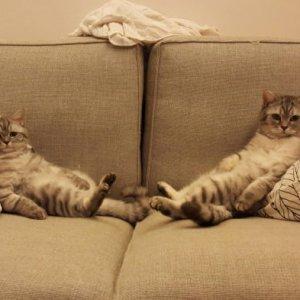 Due gattoni molto pigri