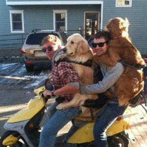 Due uomini e due cani sullo scooter