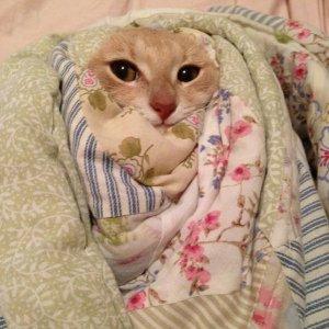 Fa troppo freddo, non esco da qui!