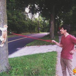 Far passeggiare il gatto