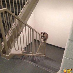 Fare le scale è faticoso