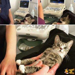 Gatta scopre di essere incinta