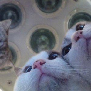 Gatti in sala operatoria