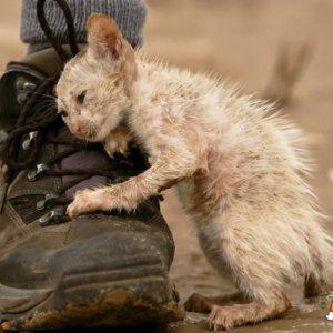 Gatto salvato riconoscente