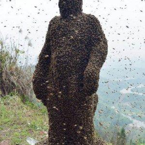 Giusto qualche ape