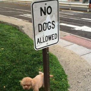 I cani non sono ammessi