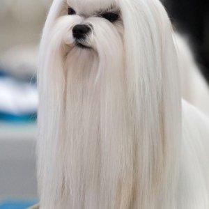 Il cane Saruman