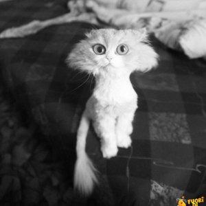 Il gatto dopo la rasatura