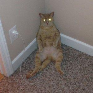 Il gatto elettrico