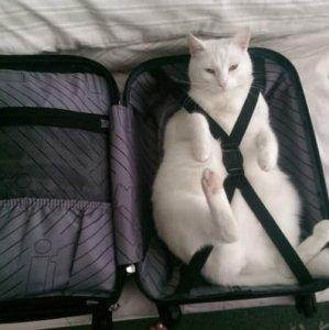 Il gatto viaggiatore