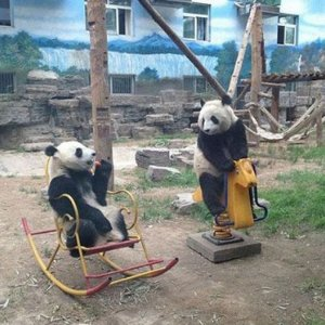 Il parco giochi per panda