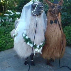 La coppia più bella del mondo