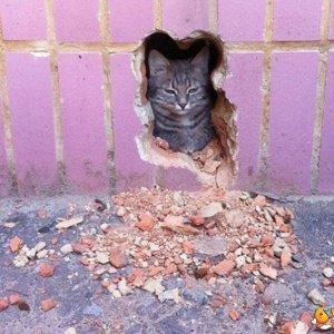 Mai fare arrabbiare un gatto