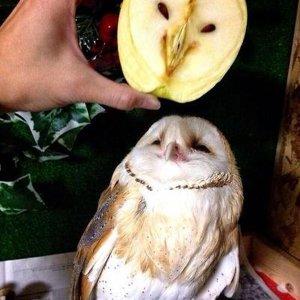La mela e la civetta