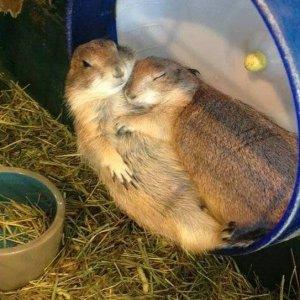 Mi si è addormentato il braccio!
