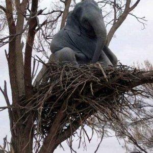 Nido per elefanti