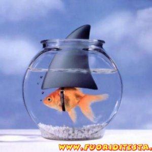 Pesce ambizioso