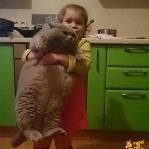 Portami al frigo piccola umana