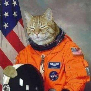 Il primo gatto nello spazio