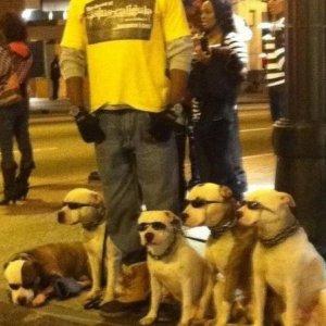 Questi cani sono dei veri fighi