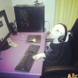 Questo è un vero cane nerd!