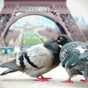 Romanticismo tra piccioni