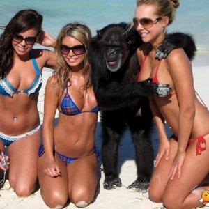 Scimpanzè maniaci
