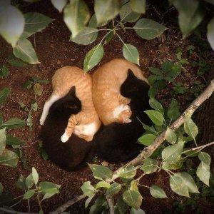 Simmetria tra gatti