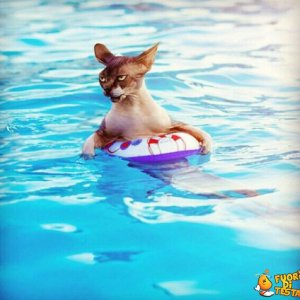 So nuotare benissimo!