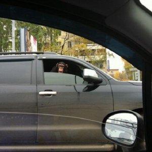 Strani compagni di guida