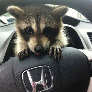 Ti prego, mi fai guidare?
