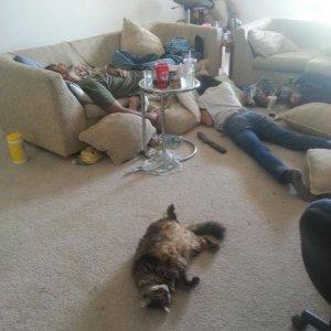 Tutti devastati dopo un party