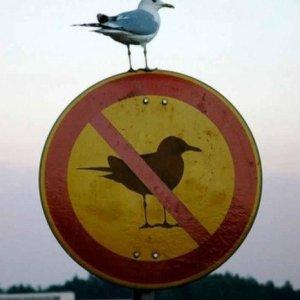 Uccello ribelle