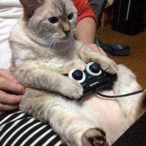 Un gatto nerd