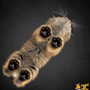 Un gatto (visto da sotto)