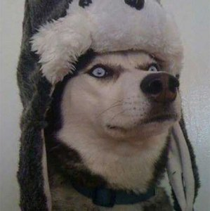 Un lupo vestito da lupo