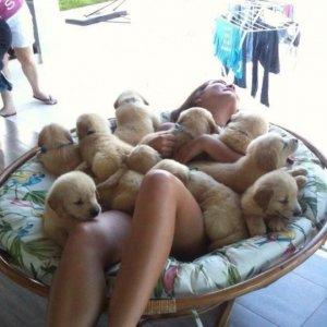 Un tuffo tra i cuccioli