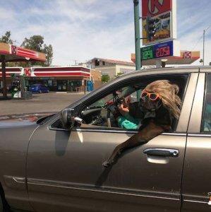 Una bella pupa in auto