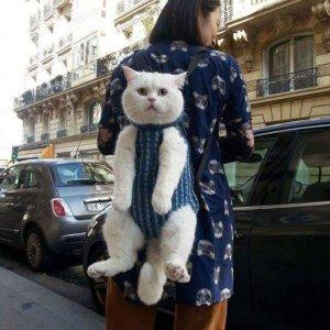 Uno zaino gattoso