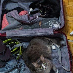Vogliamo venire in vacanza con te
