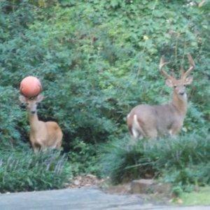 Vuoi giocare a palla con me?