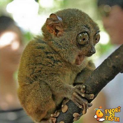 Wow, questo è un ramo!
