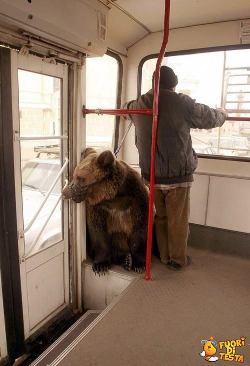 A spasso con un orso