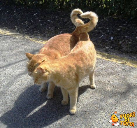 Amore tra due gatti