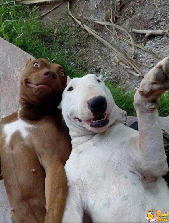 Favoloso E' sempre il momento di un selfie - Immagini divertenti PT79