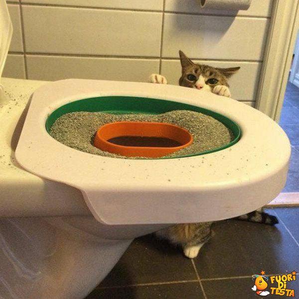 Far usare il bagno al gatto