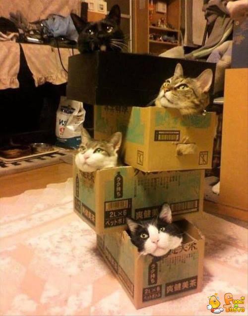 Gatti, gatti ovunque!